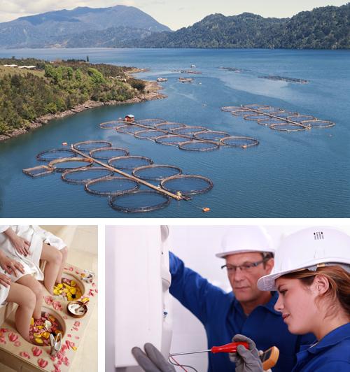 3 títulos de Formación Profesional de Grado Medio, de las familiar profesionales Imagen personal, Marítimo Pesquera y Transporte y Mantenimiento de Vehículos - CUALIFICA