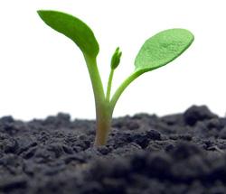 Cuatro nuevos certificados de la Familia Profesional Agraria - CUALIFICA