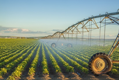potato field irrigated by a pivot sprinkler system