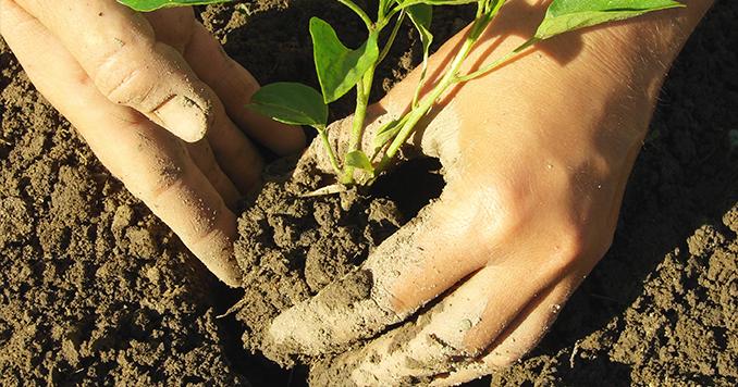 Certificado de profesionalidad en agricultura ecológica