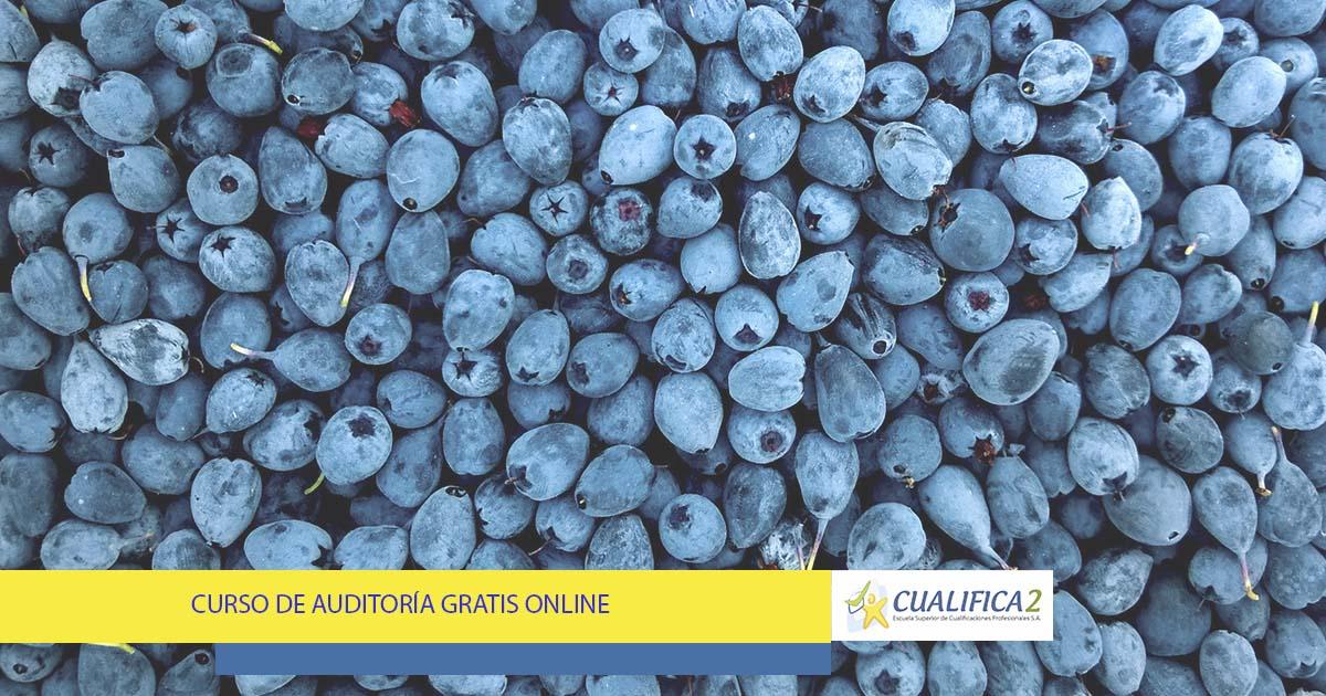 Curso de Auditoría Gratis Online